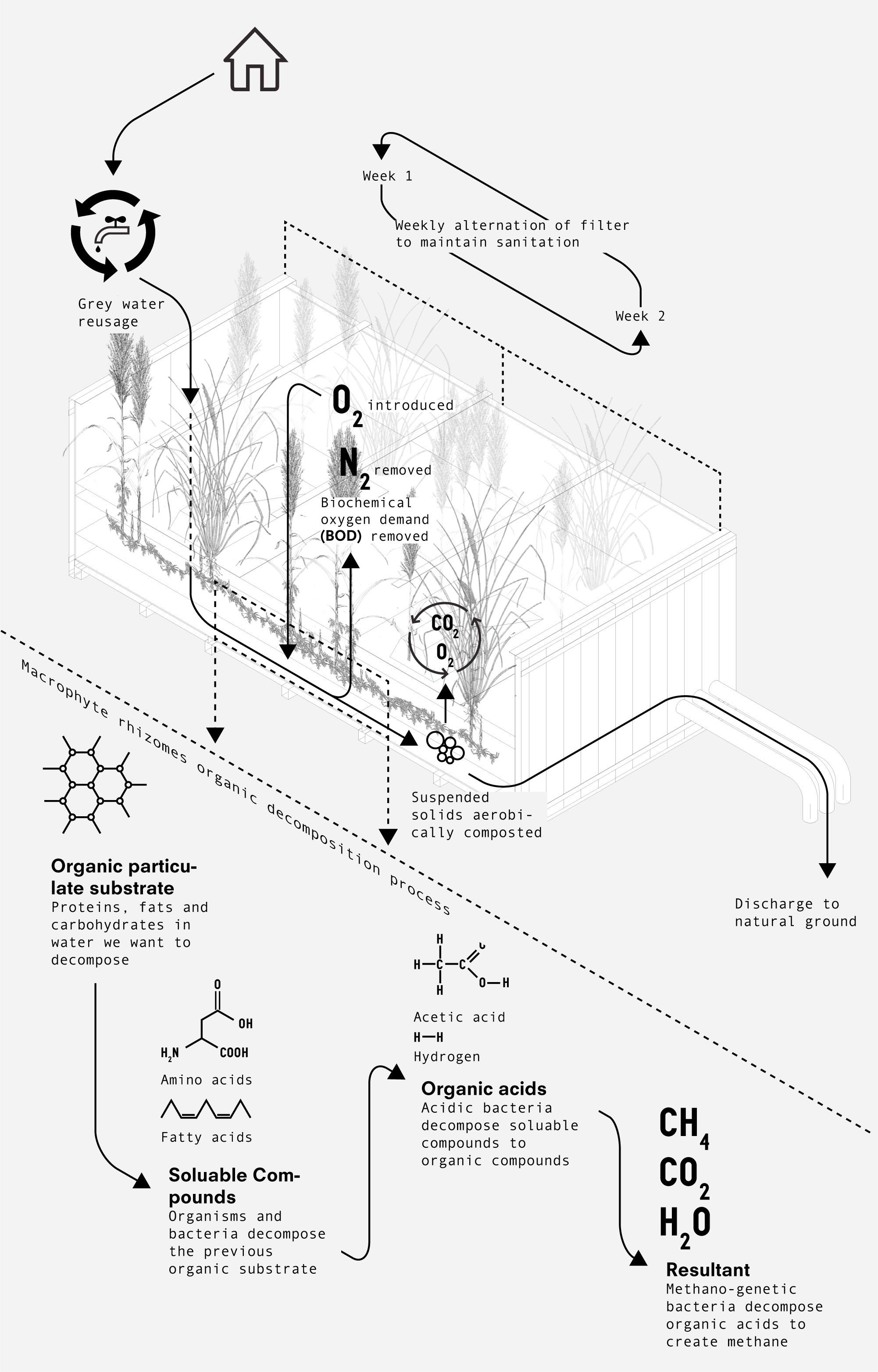 phyto schema
