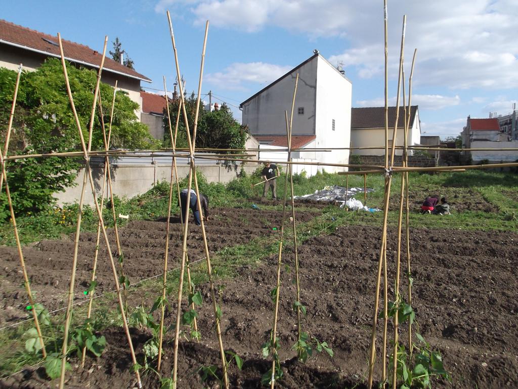 Atelier repiquage en pleine terre r urban - Quand semer les haricots verts en pleine terre ...