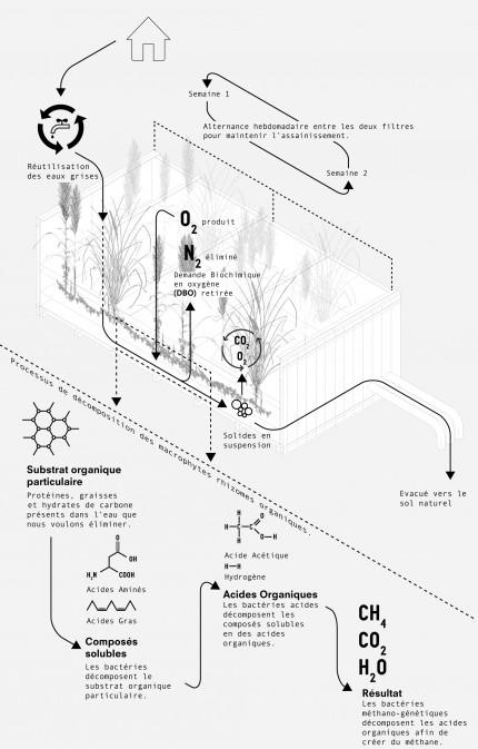 schéma phyto-ep